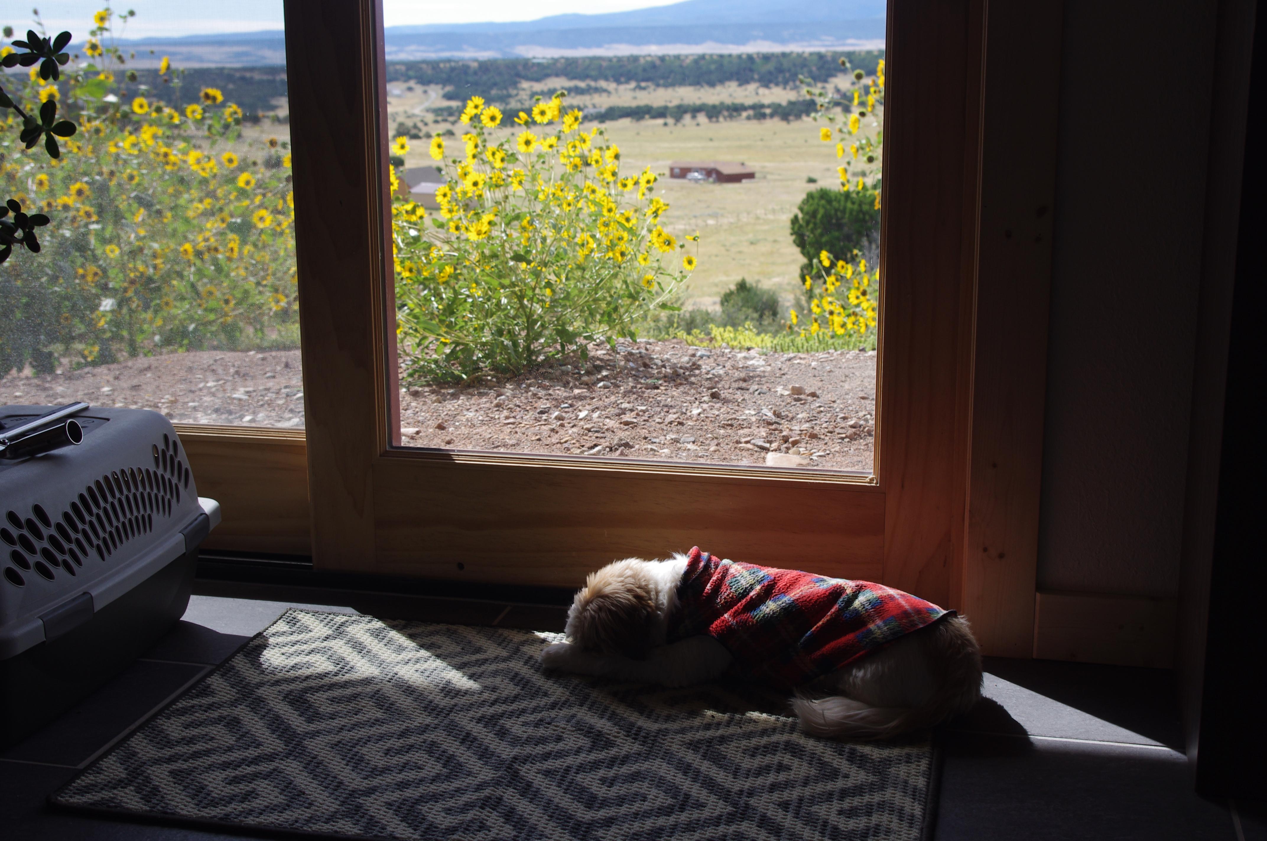 Sleepy Rasta keeping warm in sept 2016