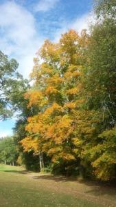 Tom autumn trees picture