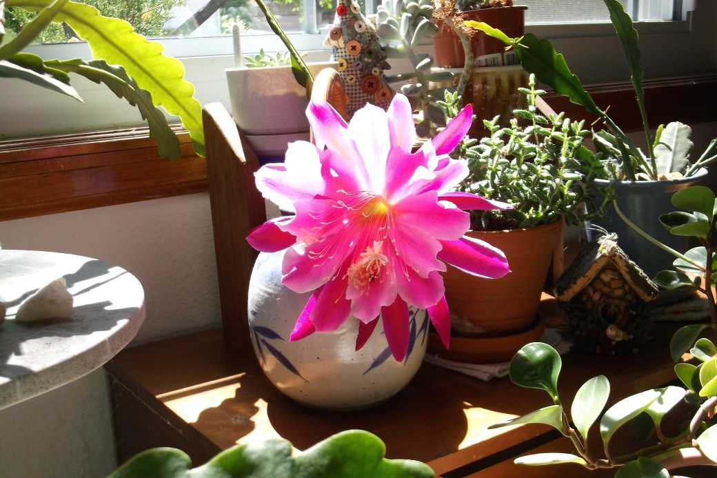 Front window orchid cactus
