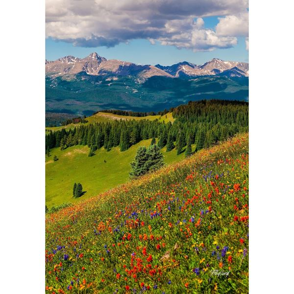 Mtns and wildflowers