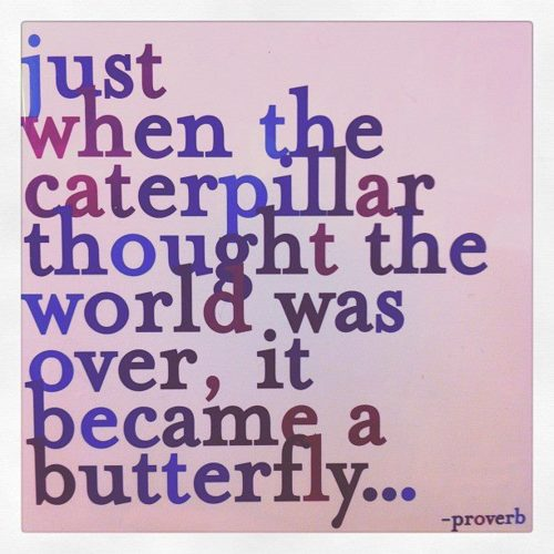 caterpillar butterfly quote