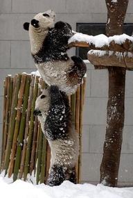 friends help friends pandas