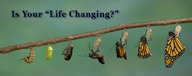 pupa tp butterfly life changing